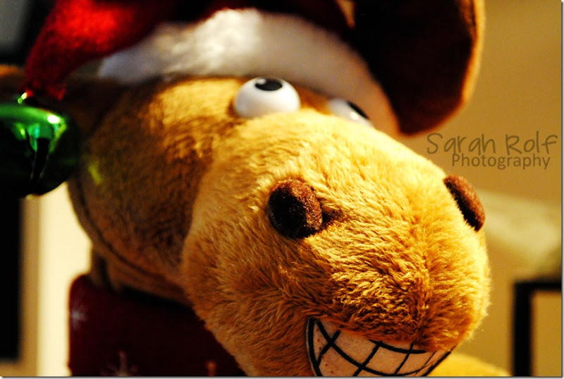 christmas-moose-close-up