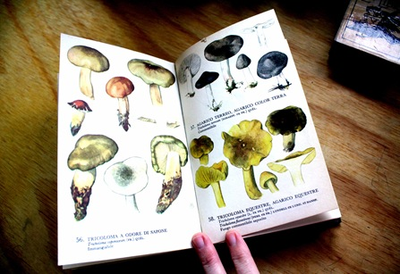 libro hongos 1 b