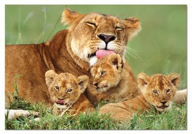 leona-con-sus-cachorros