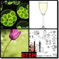 STEM- 4 Pics 1 Word Answers 3 Letters