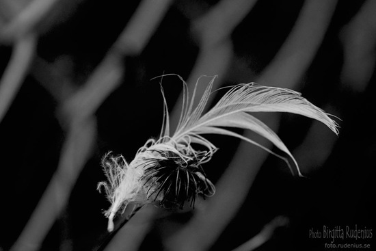 bw_20111014_feather