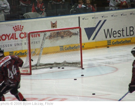 'Empty Net Goal (im Training)' photo (c) 2006, Björn Láczay - license: http://creativecommons.org/licenses/by-sa/2.0/