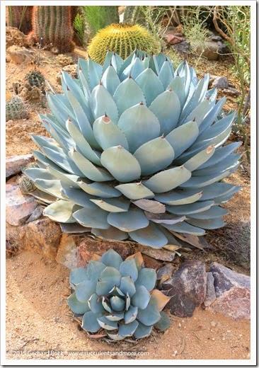 141231_Tucson_Bachs_0042