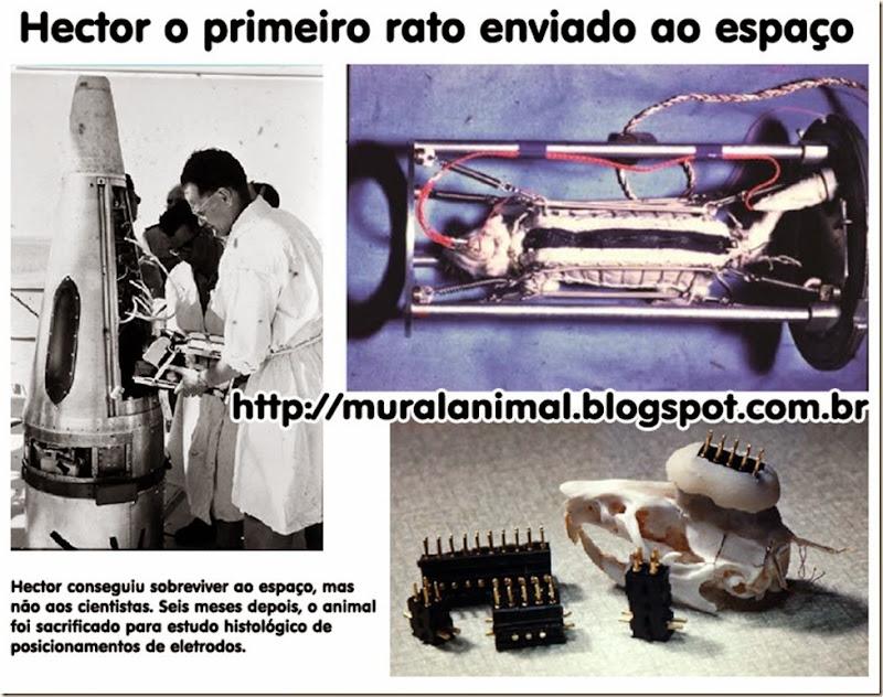 hector-rato-espaco3