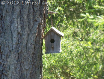 Birdhouse hanging from tree in sunshine