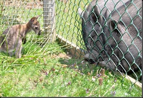 Henry checks out Alfie & Willis DSC_0418
