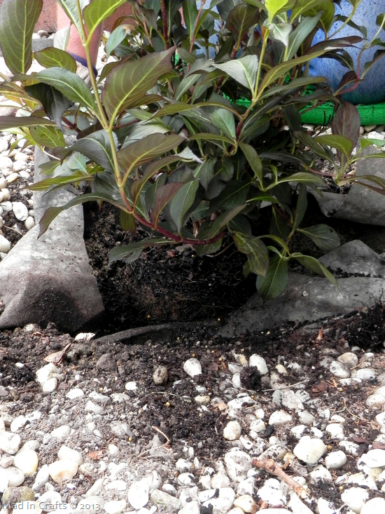 Place Shrub in Hole