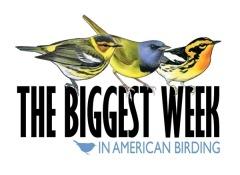 Biggestweekinamericanbirding_Logo