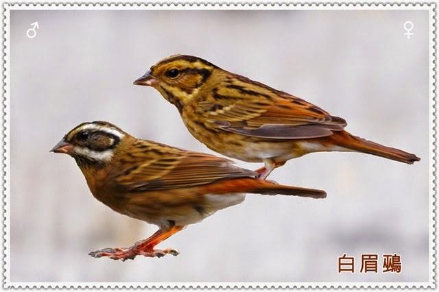 zz2bird02014