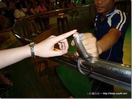 2009泰國曼谷-蛇鞭