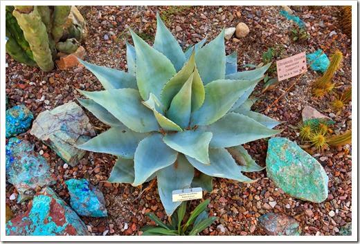 131203_TucsonBotanicalGarden_188