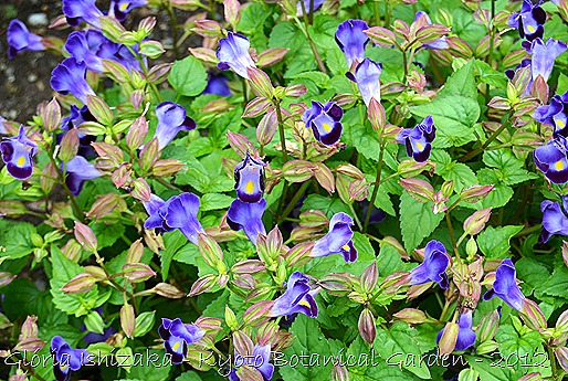 Glória Ishizaka -   Kyoto Botanical Garden 2012 - 126