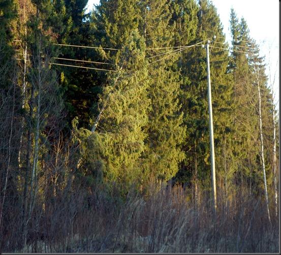 kaatuneita puita 012