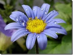 flor de luz 4