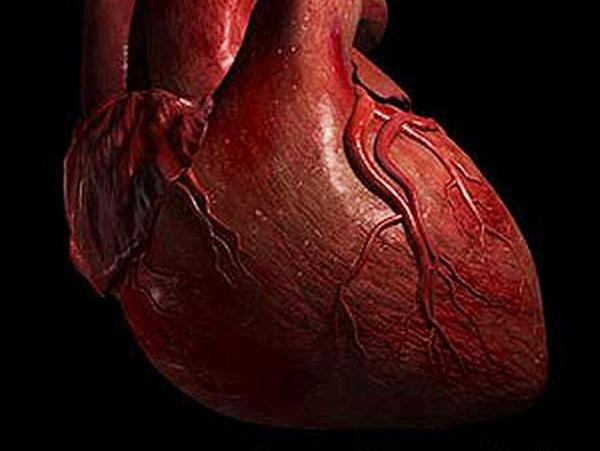 8- O coração humano