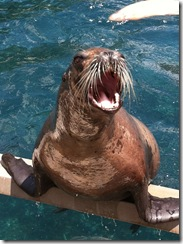 seal open