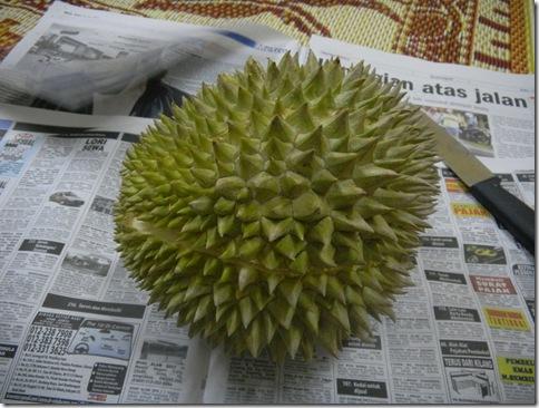 Durian Balik Pulau 1