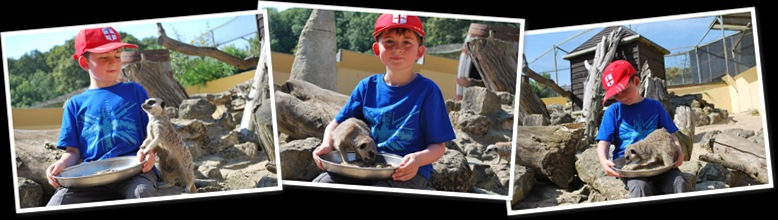 View Finlay Evemys Meerkat Encounter