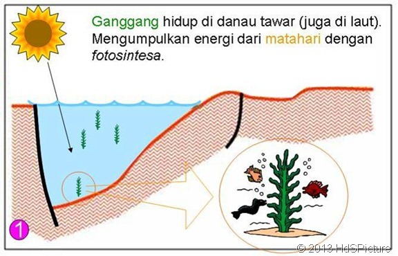 proses-pembentukan-minyak-bumi-13
