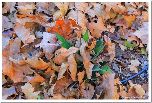 131122_home_leaves_03