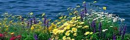 flower panoram_nebesnoe.info_02.jpg