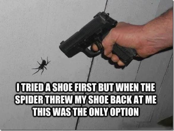 australia-scary-spiders-020