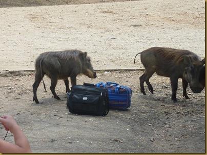 Ziwa, Murchison Falls trip 152
