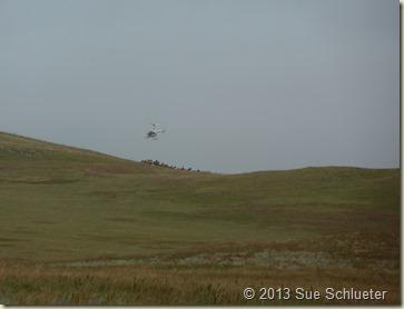 2013 Sep 08_Custer State Park Wildlife Loop South 2nd time_0598