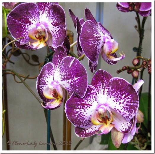 02-08-orchids8