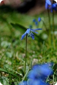 trädgården 28 april 2012 003