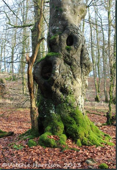 48-old-tree