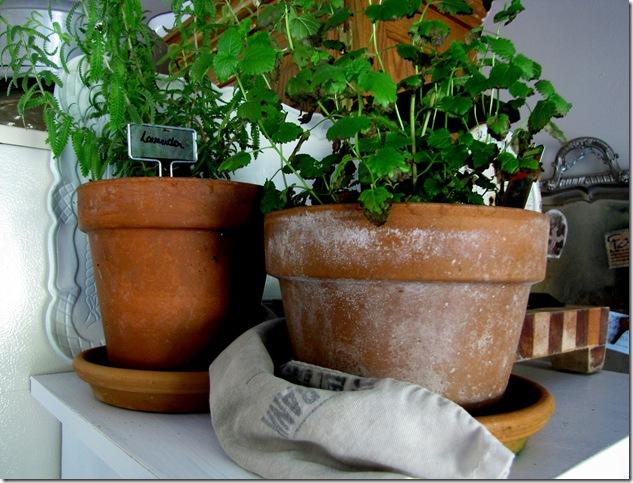 herb pots 2