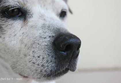 Day013 Buddy Nose