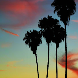 Cali by Arian Nazarian - Novices Only Landscapes ( orange, palm tree, california, sunset, la )