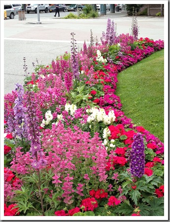 pink border with delphiniums, pelargoniums, snapdragons, salvia, foxgloves