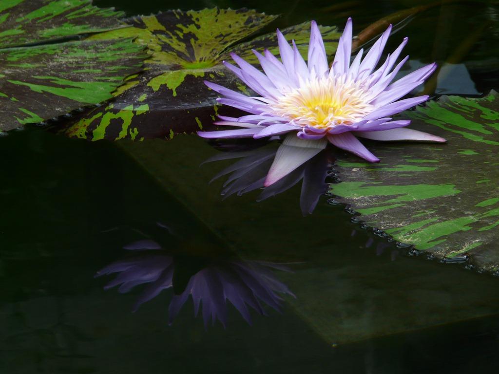 [Kew-Gardens-733.jpg]