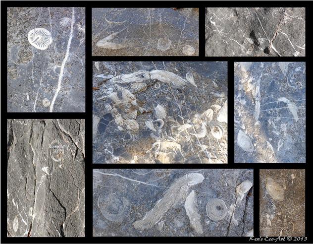 Potosi Fossils