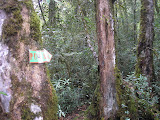 Gunung Sago puncak sign (Daniel Quinn, September 2011)