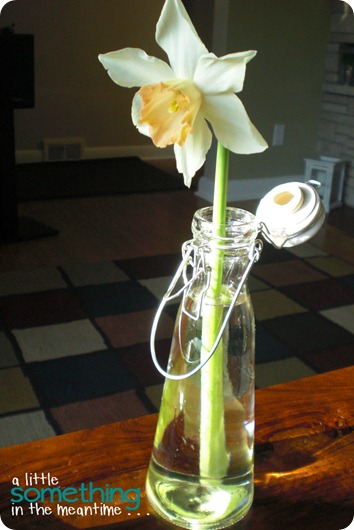 Daffodil in Vintage Look Bottle