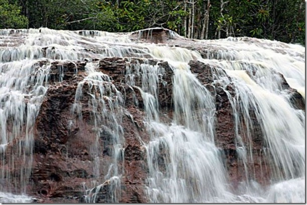 beautiful-amazon-rain-forest-8