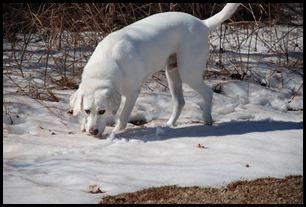 snow boy 2011