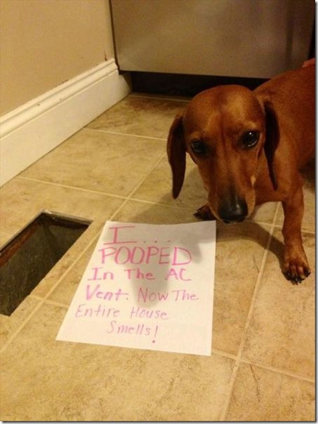 dog-shaming-bad-21