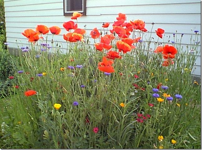 Wildflower bed 2002 b