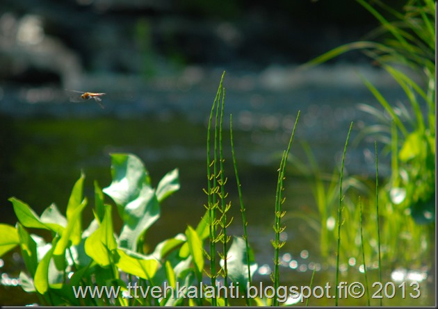 katuvalon vaihto sudenkorento super-komura 095
