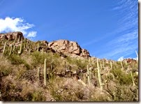 Tucson Sabino Canyon 040