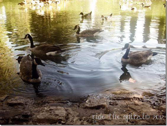 ducks9222012