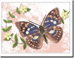 multi notecard thumbnail