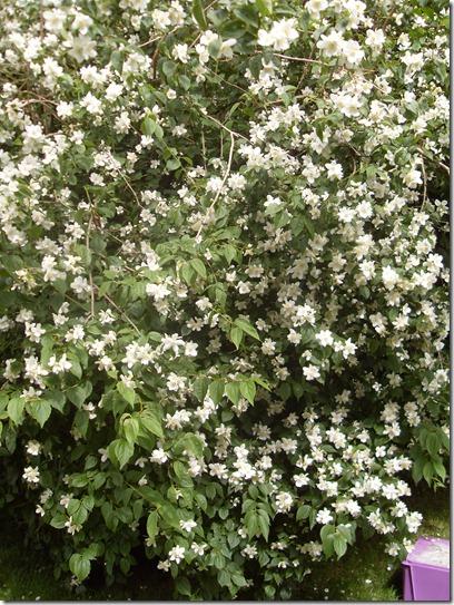 2012_07 Blumen im Garten (18)