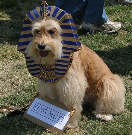 cachorroidiota5