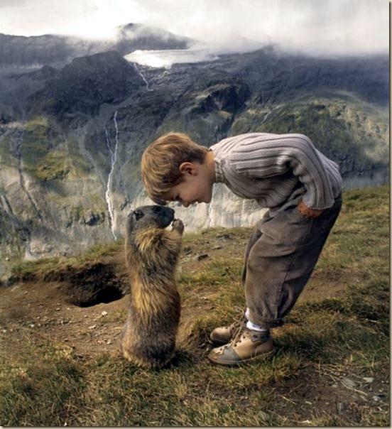L'enfant et les marmottes-002